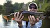 a great brook male trout- fly fishing with big dries in early season